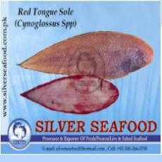 Red Tongue Sole Fish